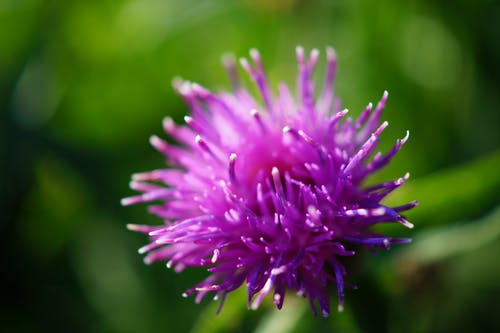 Purple Flower in Macro Lens Photography
