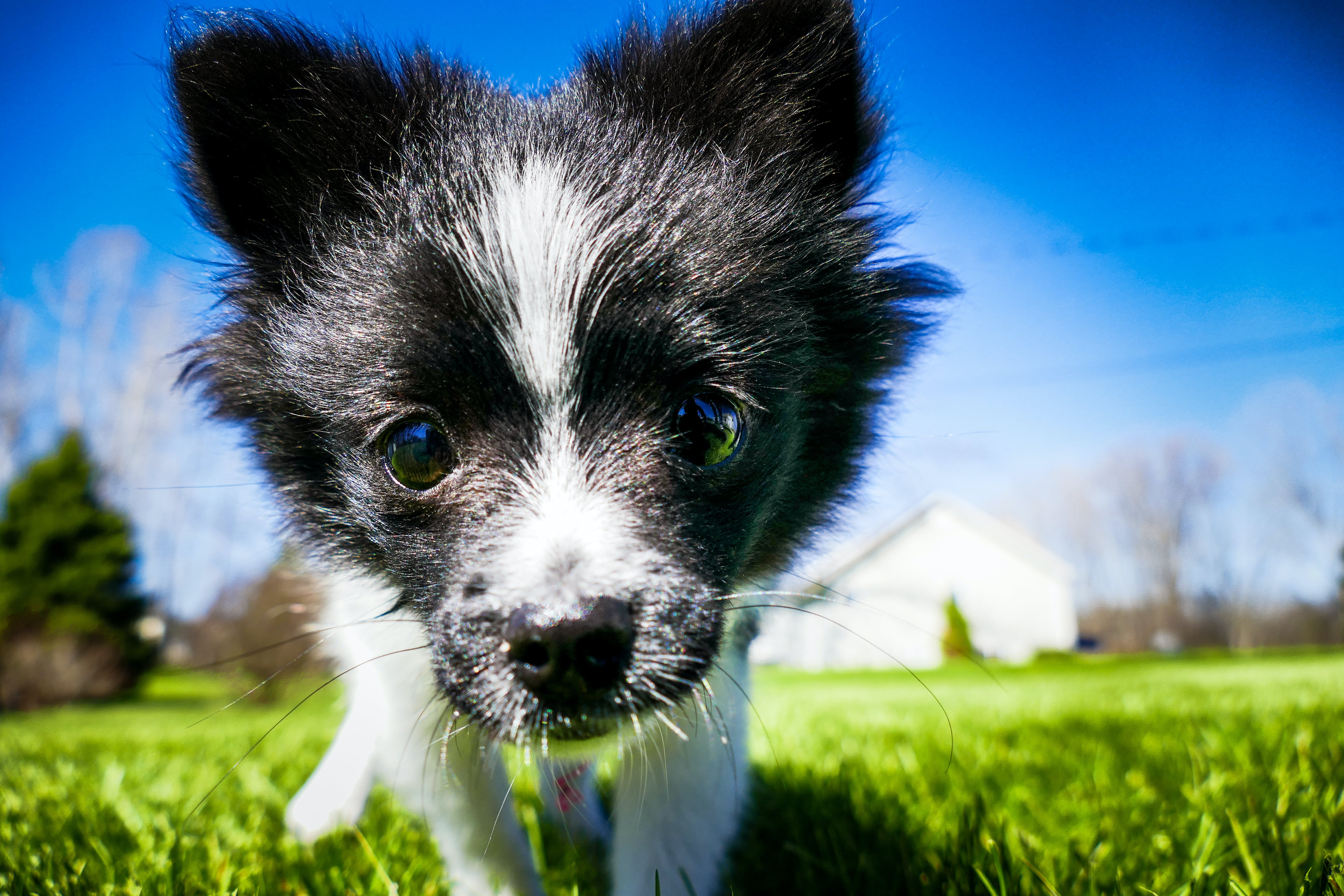 Closeup Photo of Short-coatedwhite and Black Puppy