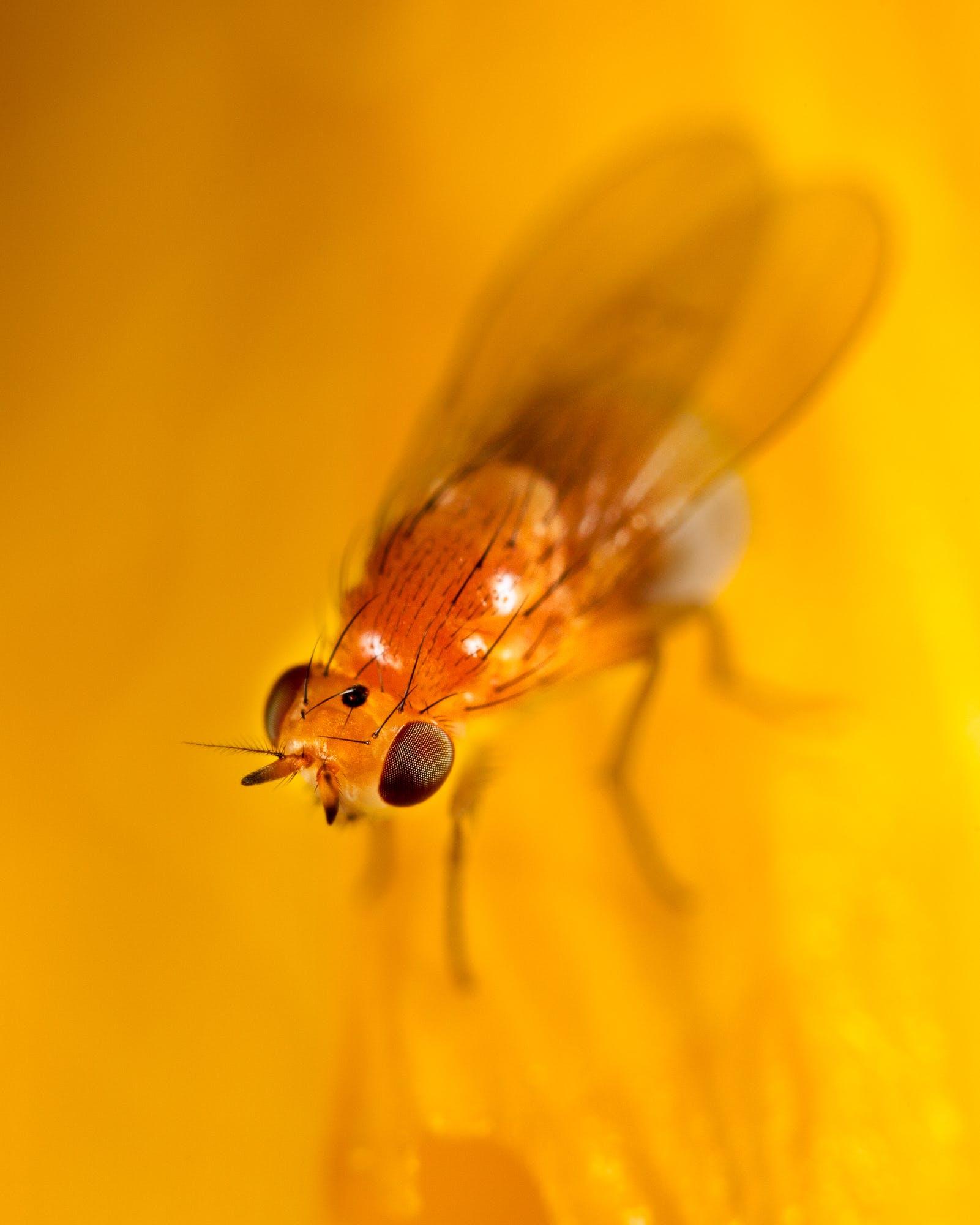 Free stock photo of insect, macro, yellow bug