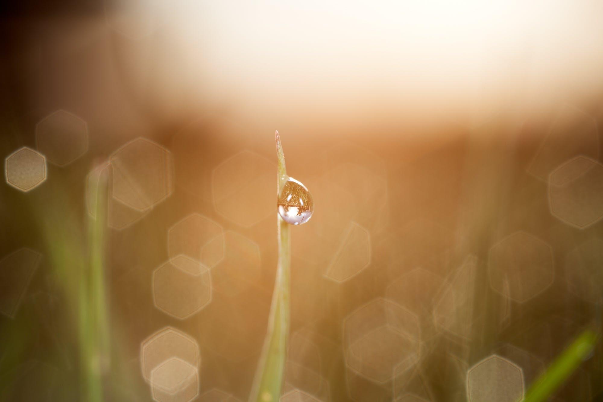 Free stock photo of bokeh, dew, droplet, grass