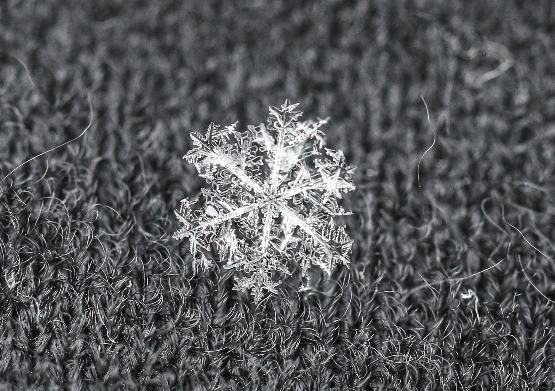Free stock photo of macro, snow, snowflake