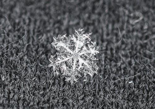 Бесплатное стоковое фото с максросъемка, снег, снежинка