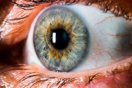 Бесплатное стоковое фото с глаз, ирис, максросъемка, снимок крупным планом