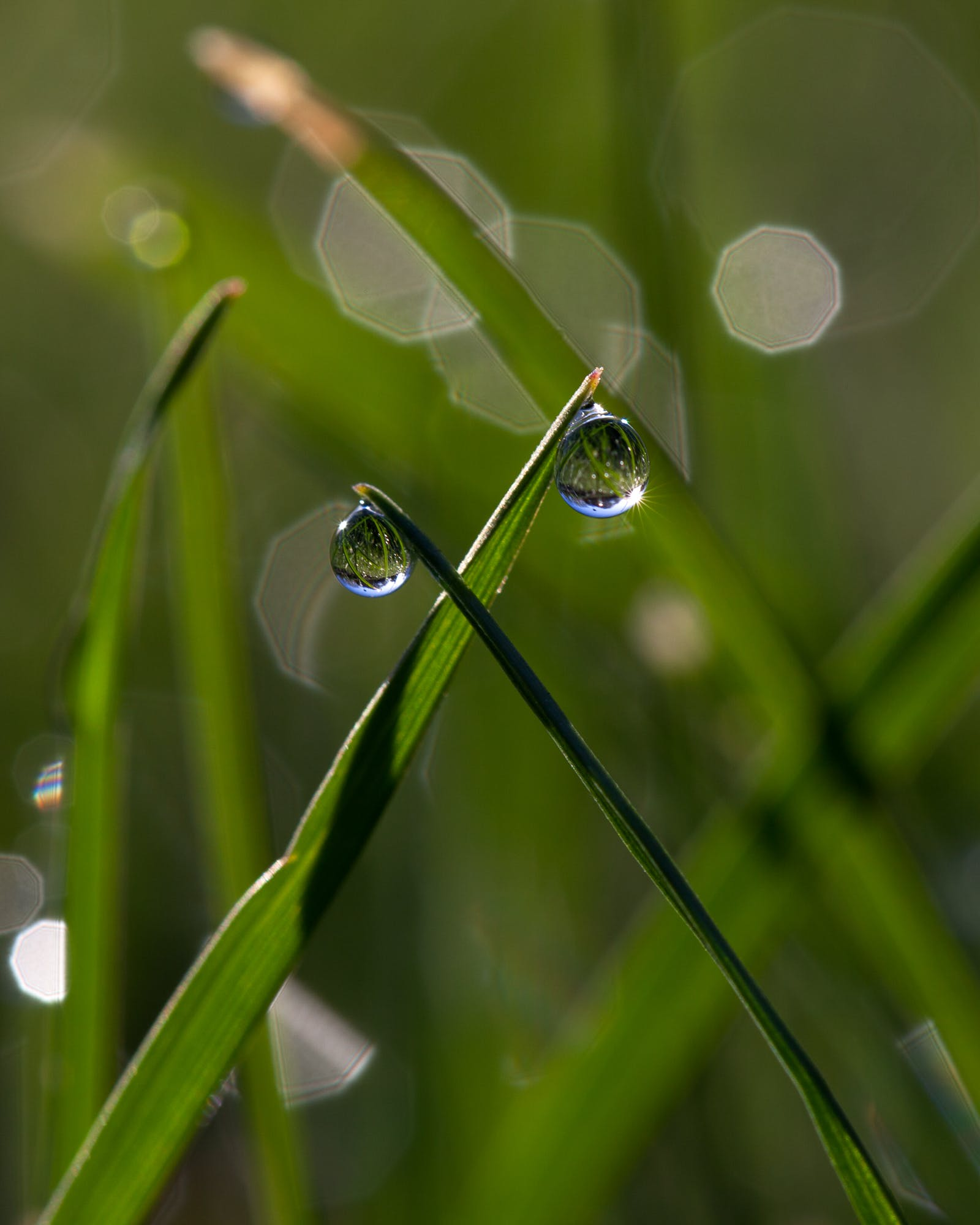 Free stock photo of dew, dew drops, droplets, grass