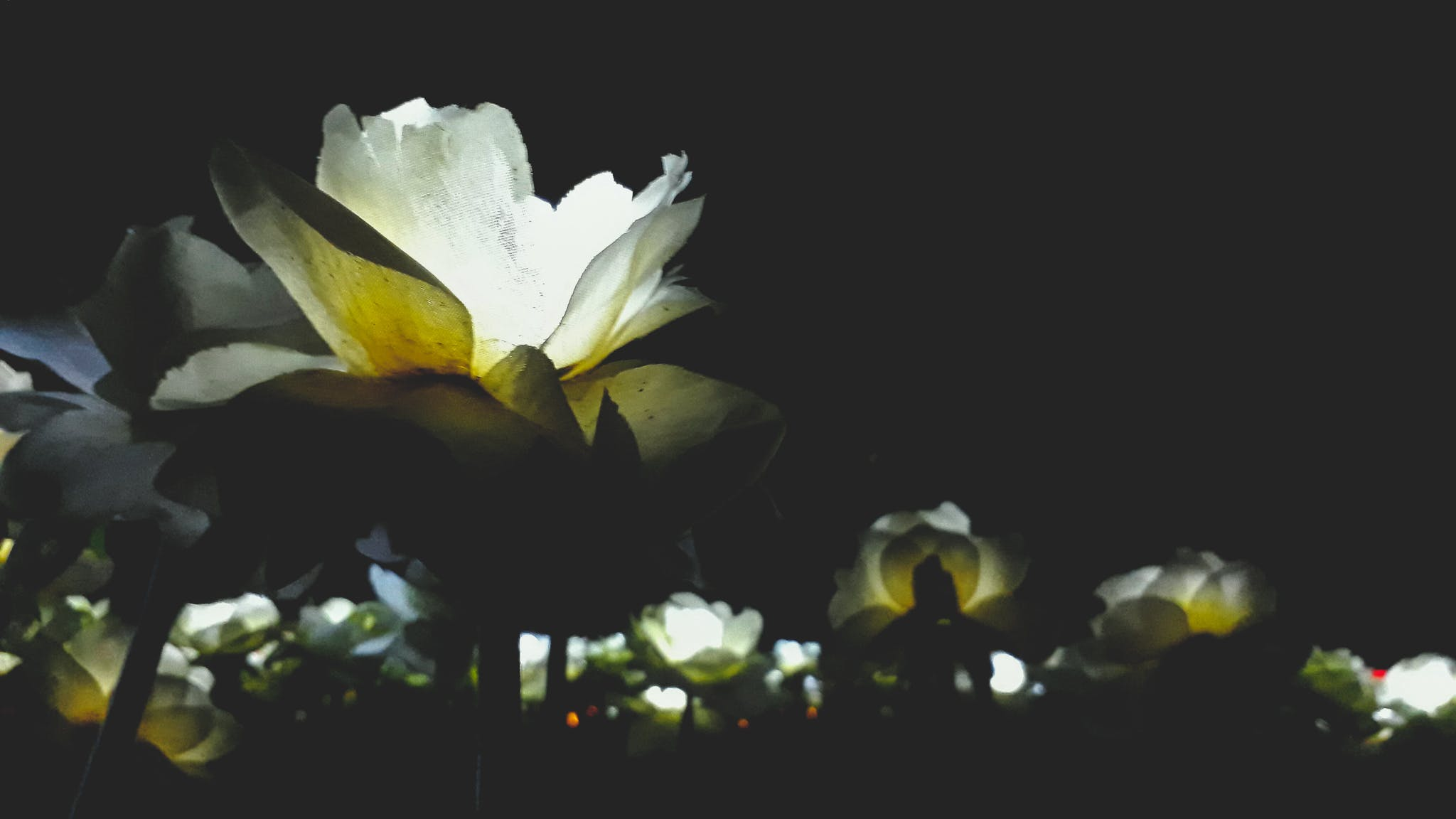 Free stock photo of artificial flowers, led lights, night, rose