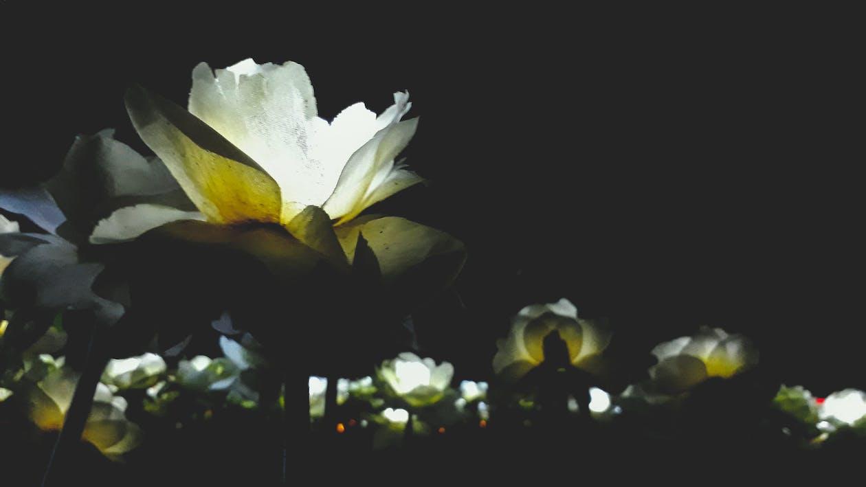 led 燈, 人造花, 假花