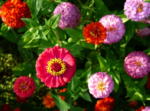 Бесплатное стоковое фото с красный, красочный, цветы