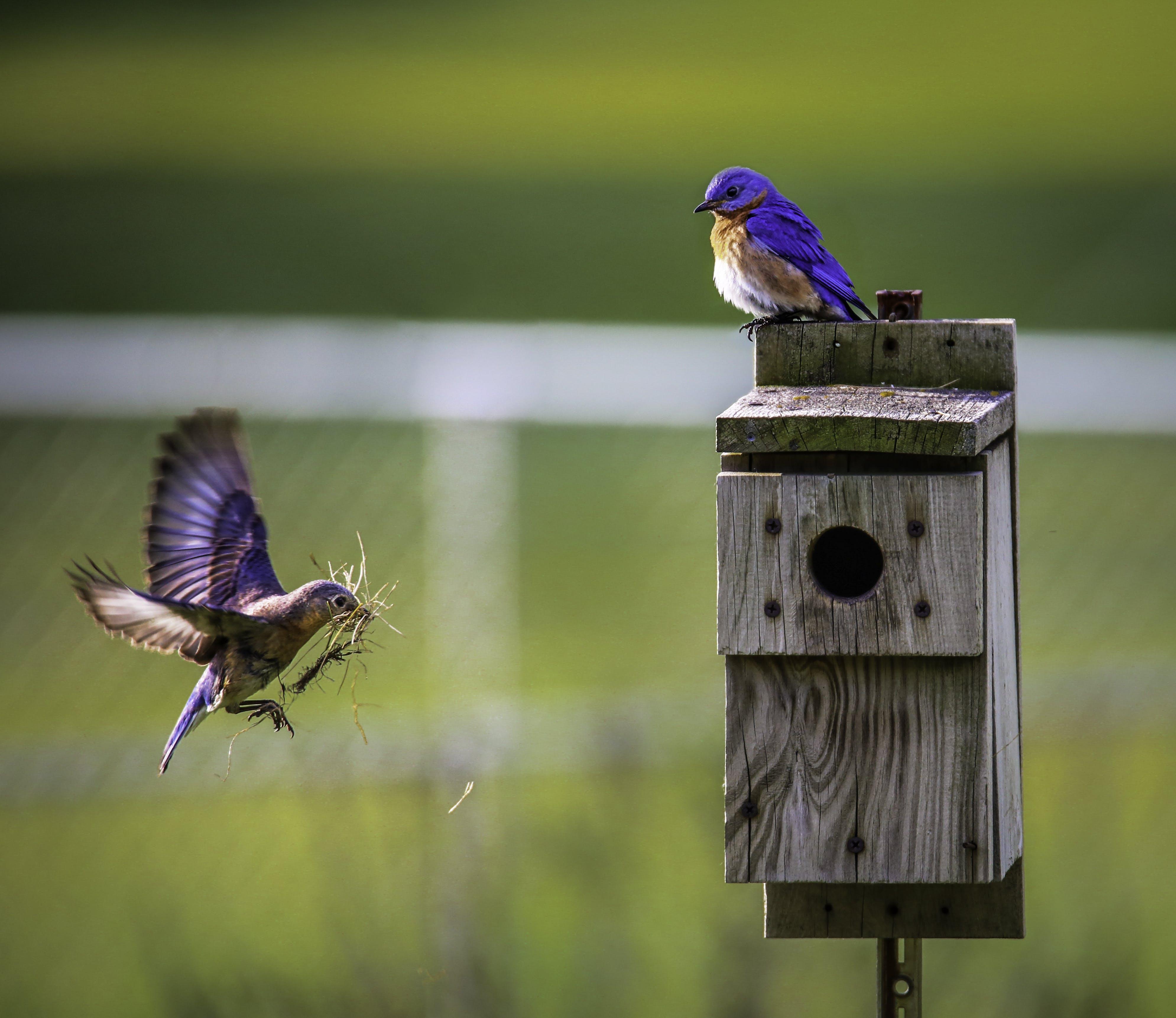 Brown Bird Flying Towards Birdhouse