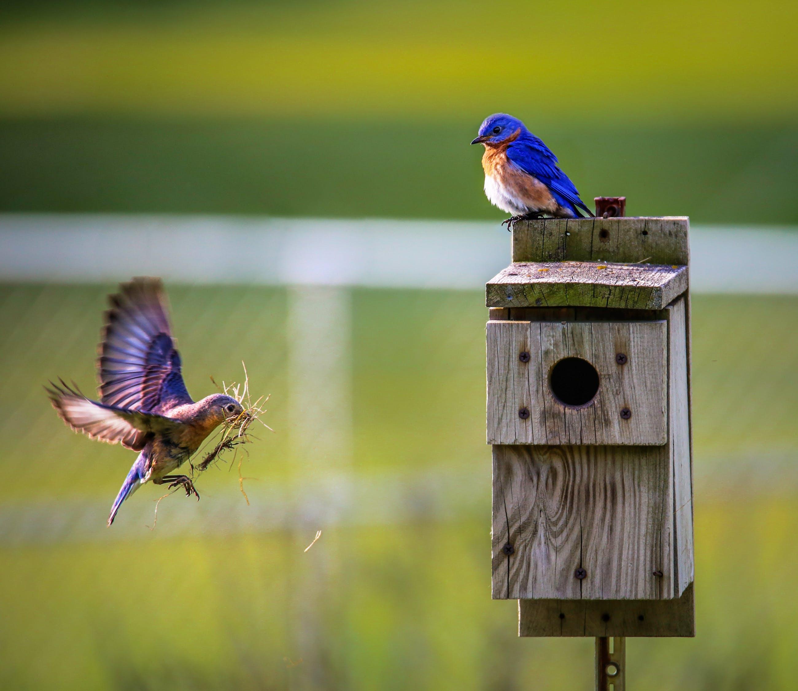 two birds near wooden birdhouse