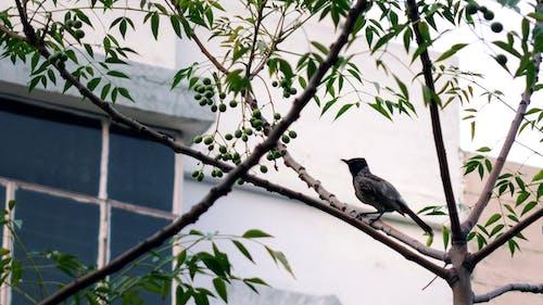 Free stock photo of #bird, #outdoorchallenge, #Tree, #wildlife