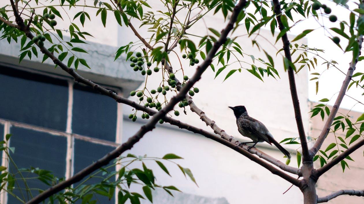 #arbre, #faune, #oiseau