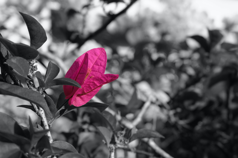Free stock photo of color splash flower garden