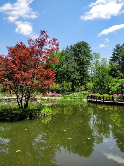 Foto d'estoc gratuïta de arbres, cel, cel blau, pont