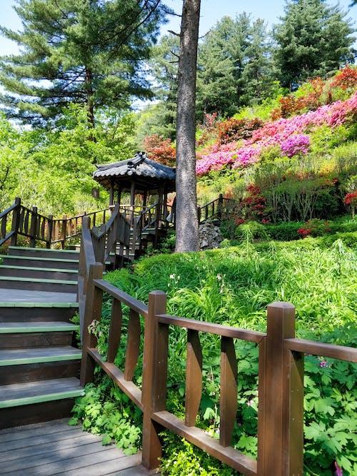 Foto d'estoc gratuïta de al pis de dalt, arbres, cabana de fusta, escales