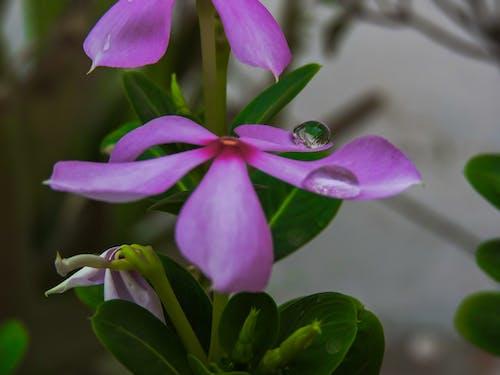 ピンクの花, マクロ, マクロ写真の無料の写真素材