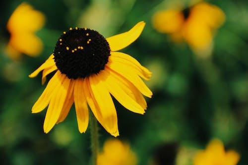 çiçek, güzel çiçekler içeren Ücretsiz stok fotoğraf