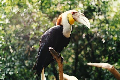 #새, 동물, 코뿔새의 무료 스톡 사진
