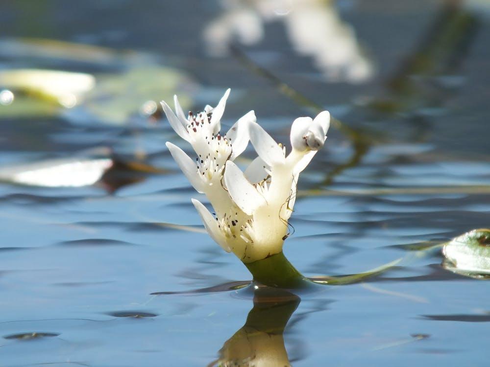 flower, water