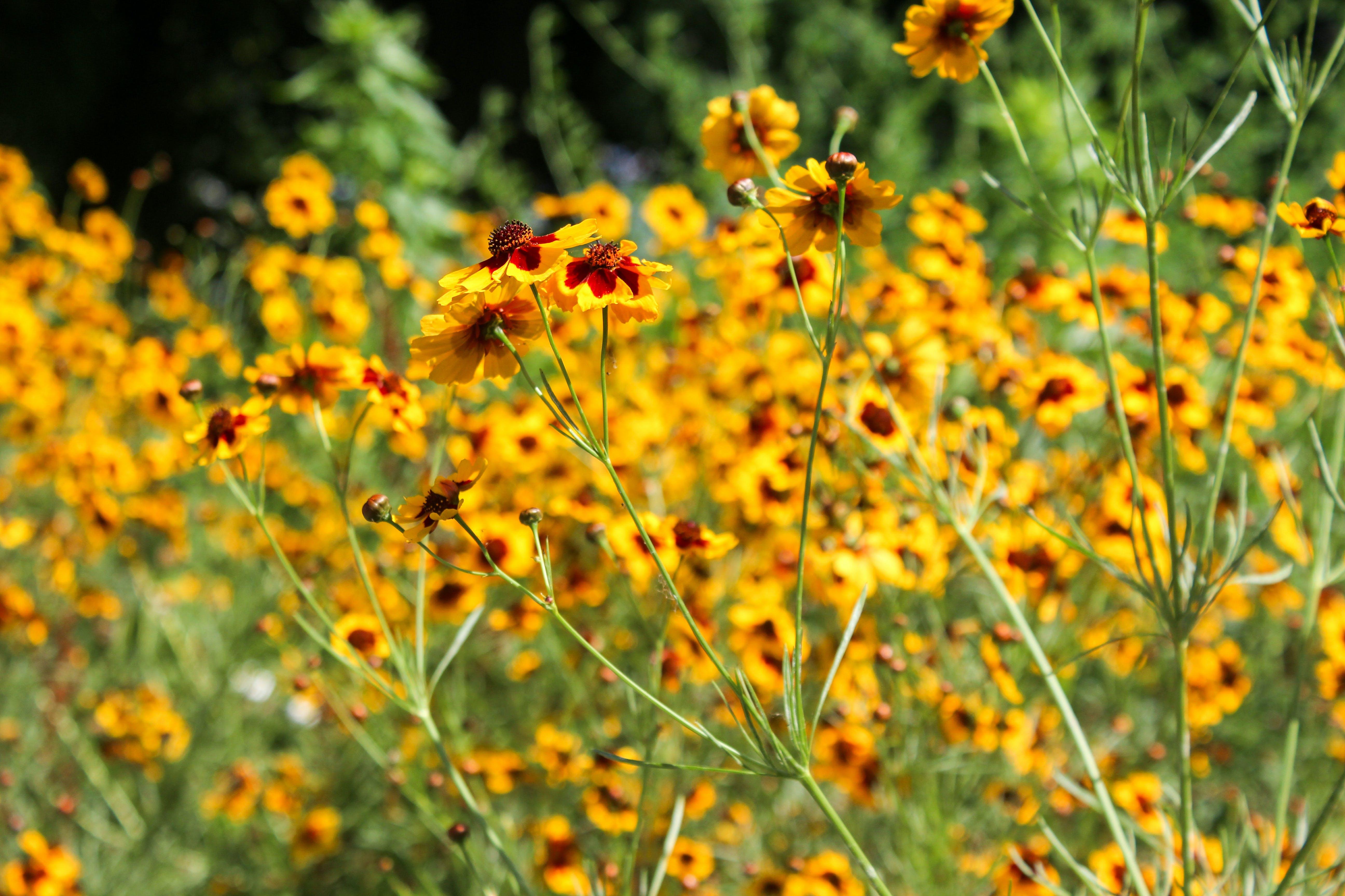 Foto d'estoc gratuïta de brillant, flors