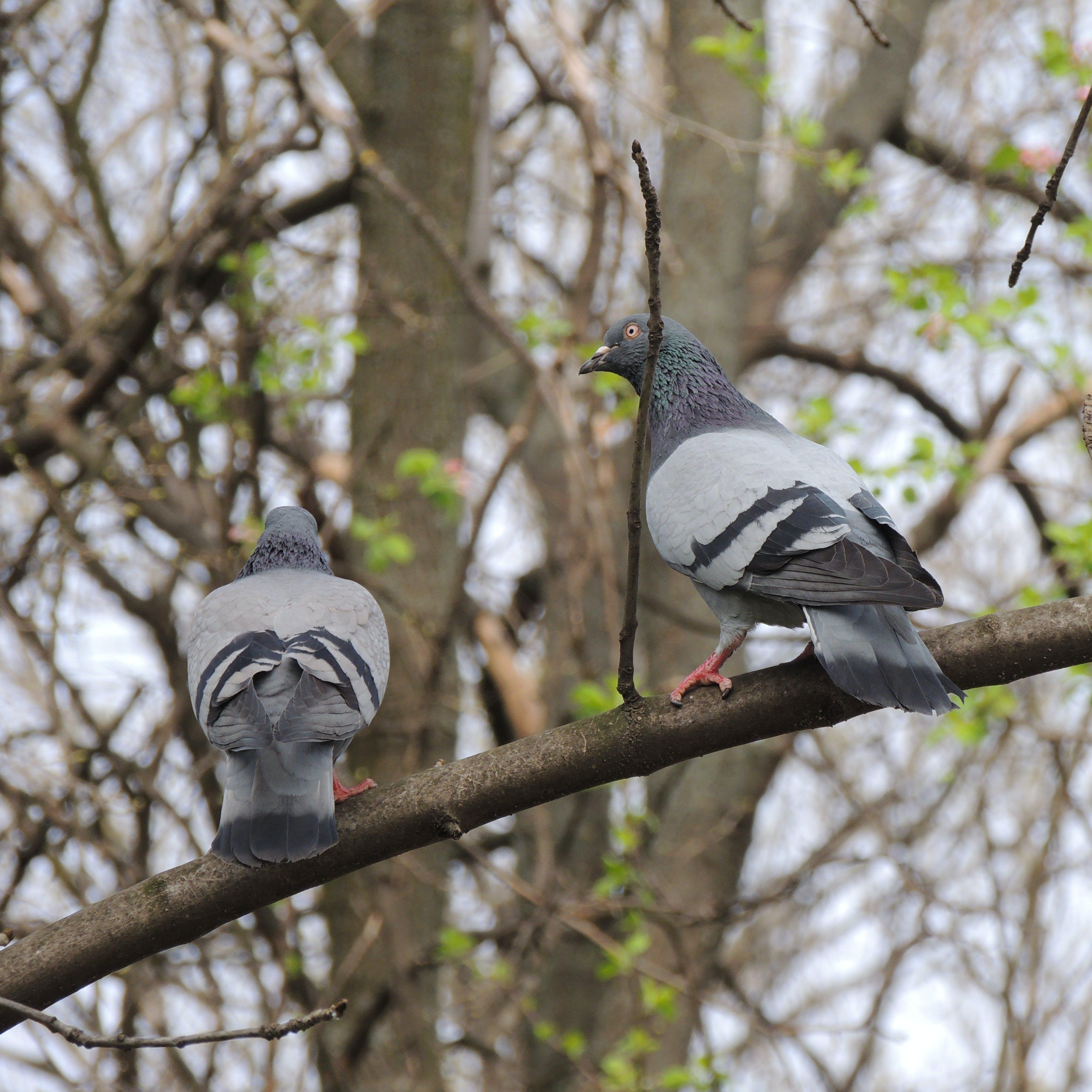 Free stock photo of bird, birds, dove, fly
