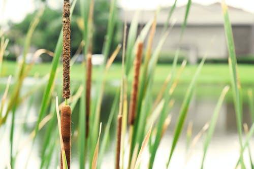 bitkiler, cattail, çim, gölet içeren Ücretsiz stok fotoğraf