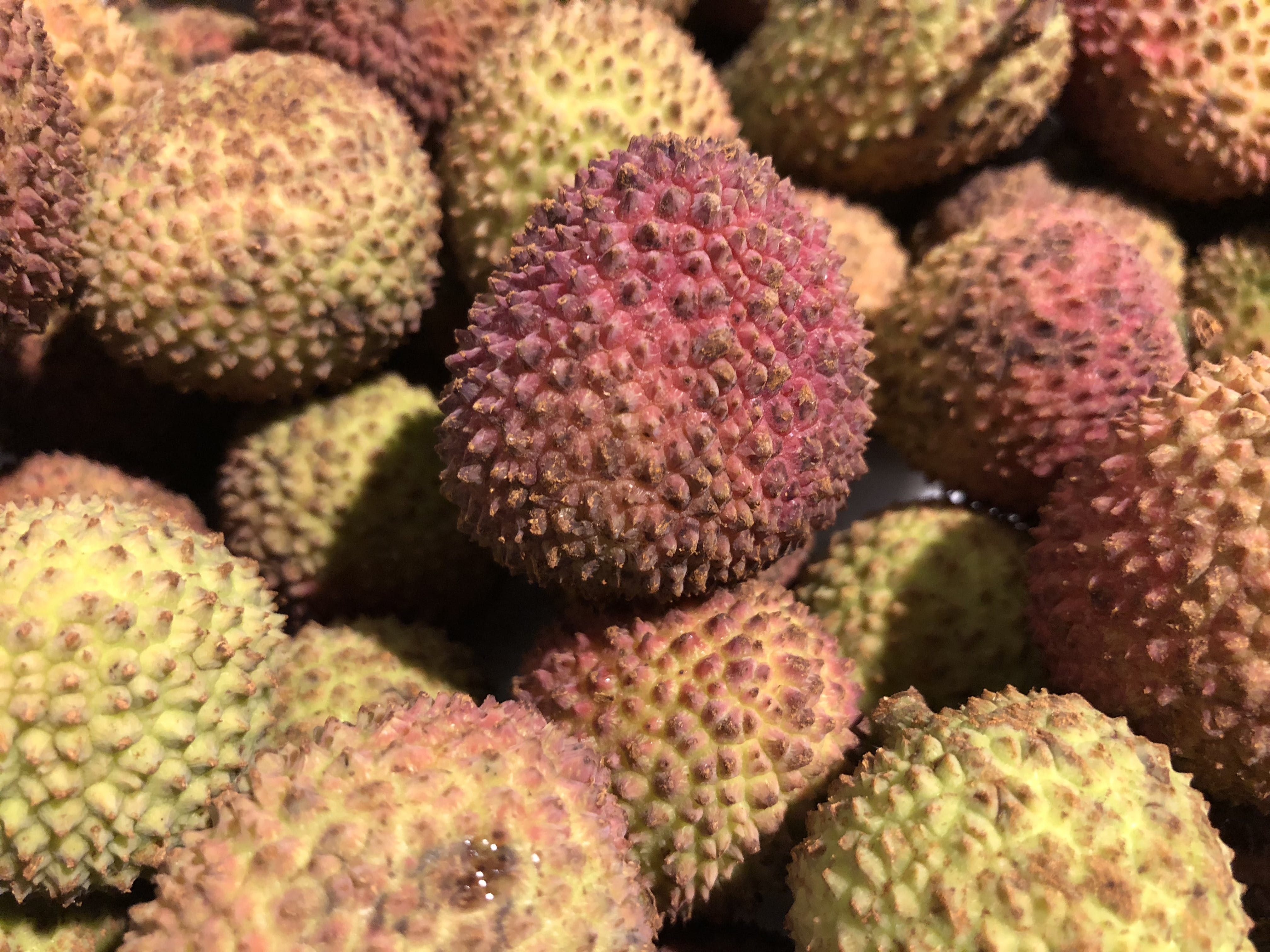 Free stock photo of china, fruit, lychee, tropical