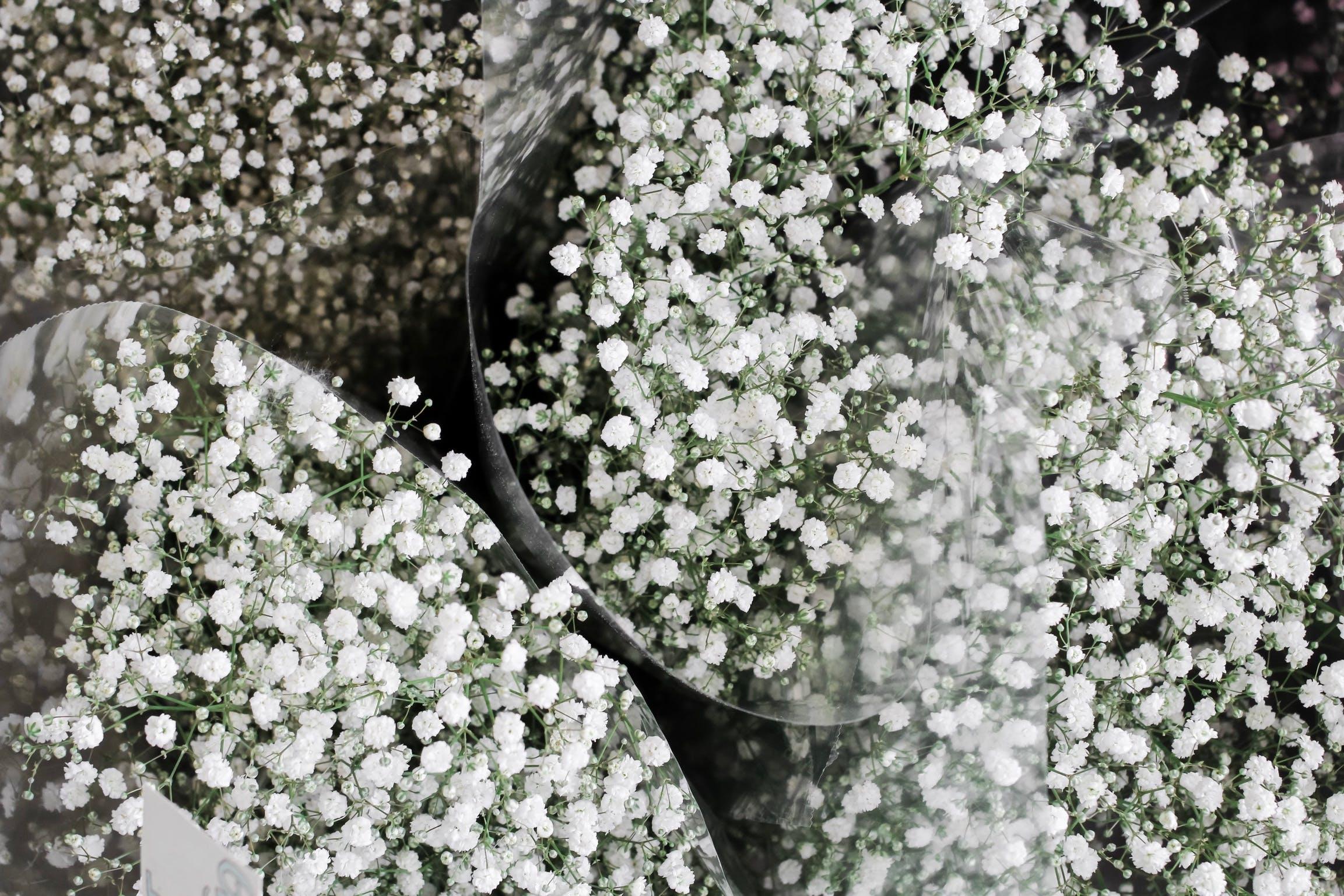 Free stock photo of flowers, flower, beautiful, minimal