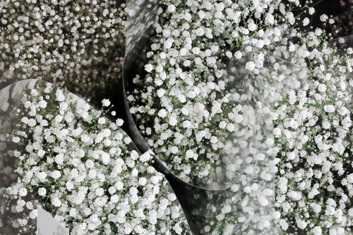 белые маргаритки, белый цветок, букет цветов