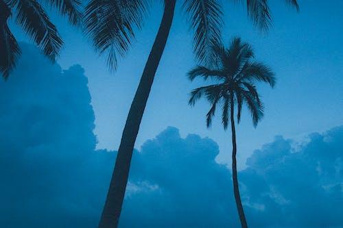 Imagine de stoc gratuită din albastru, apus, cer, faleză