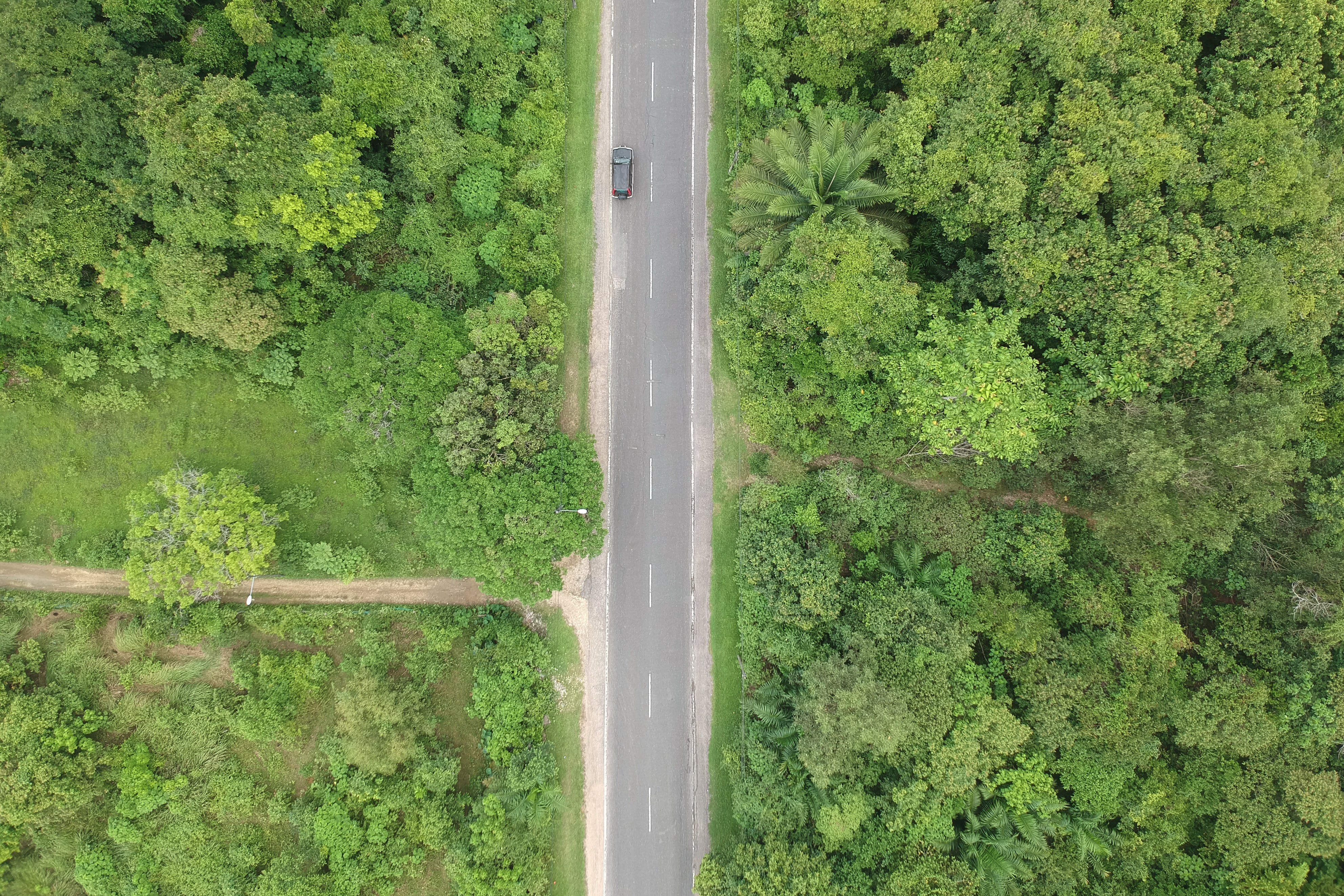 Aerial Photo of Black Vehicle on Grey Concrete Road Between Forest