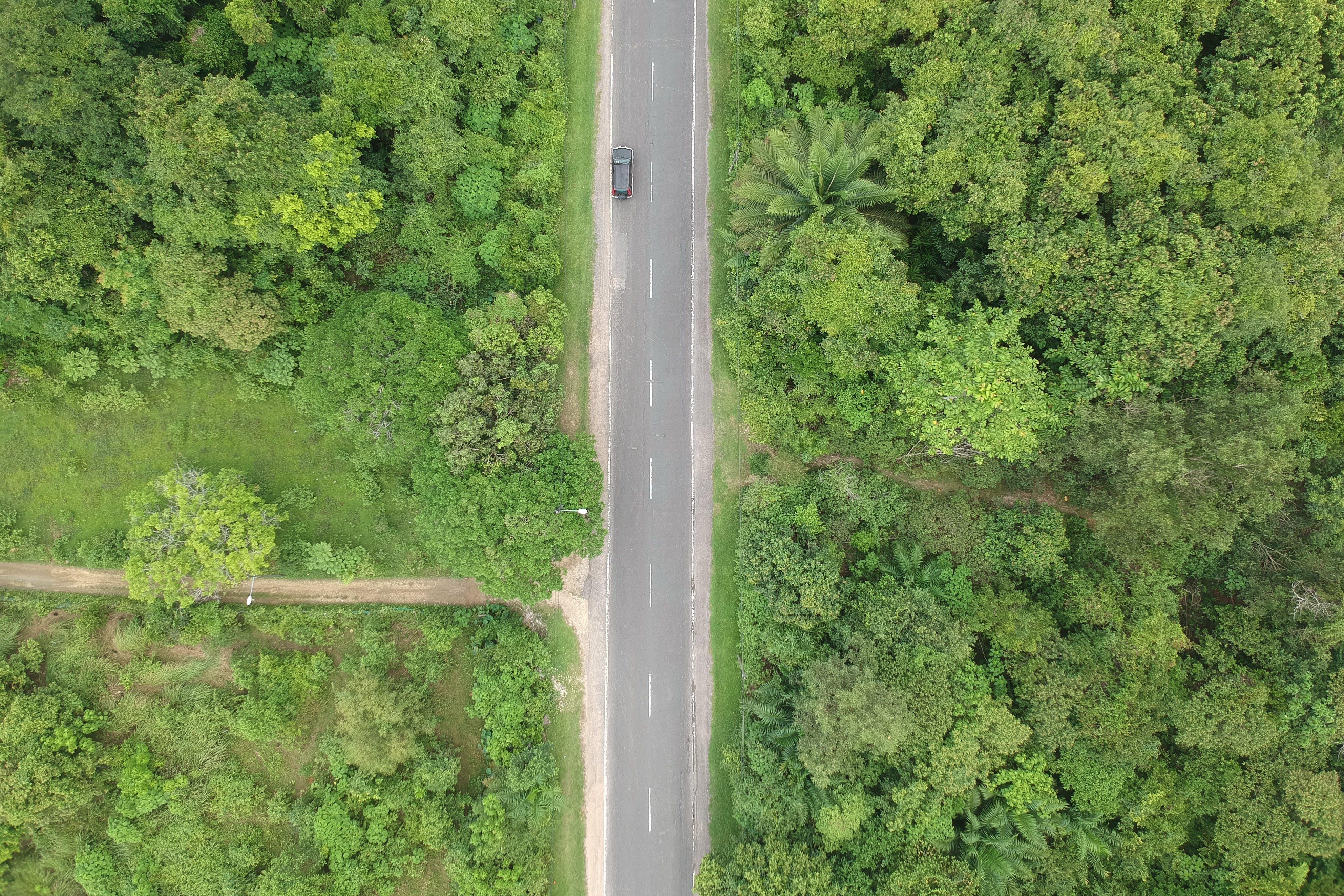 나무, 녹색, 도로, 숲의 무료 스톡 사진