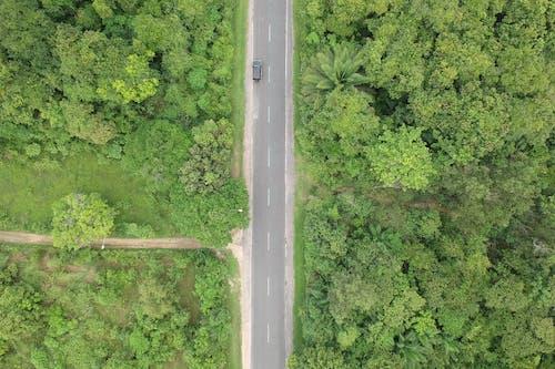 天性, 柏油路面, 森林, 樹木 的 免費圖庫相片