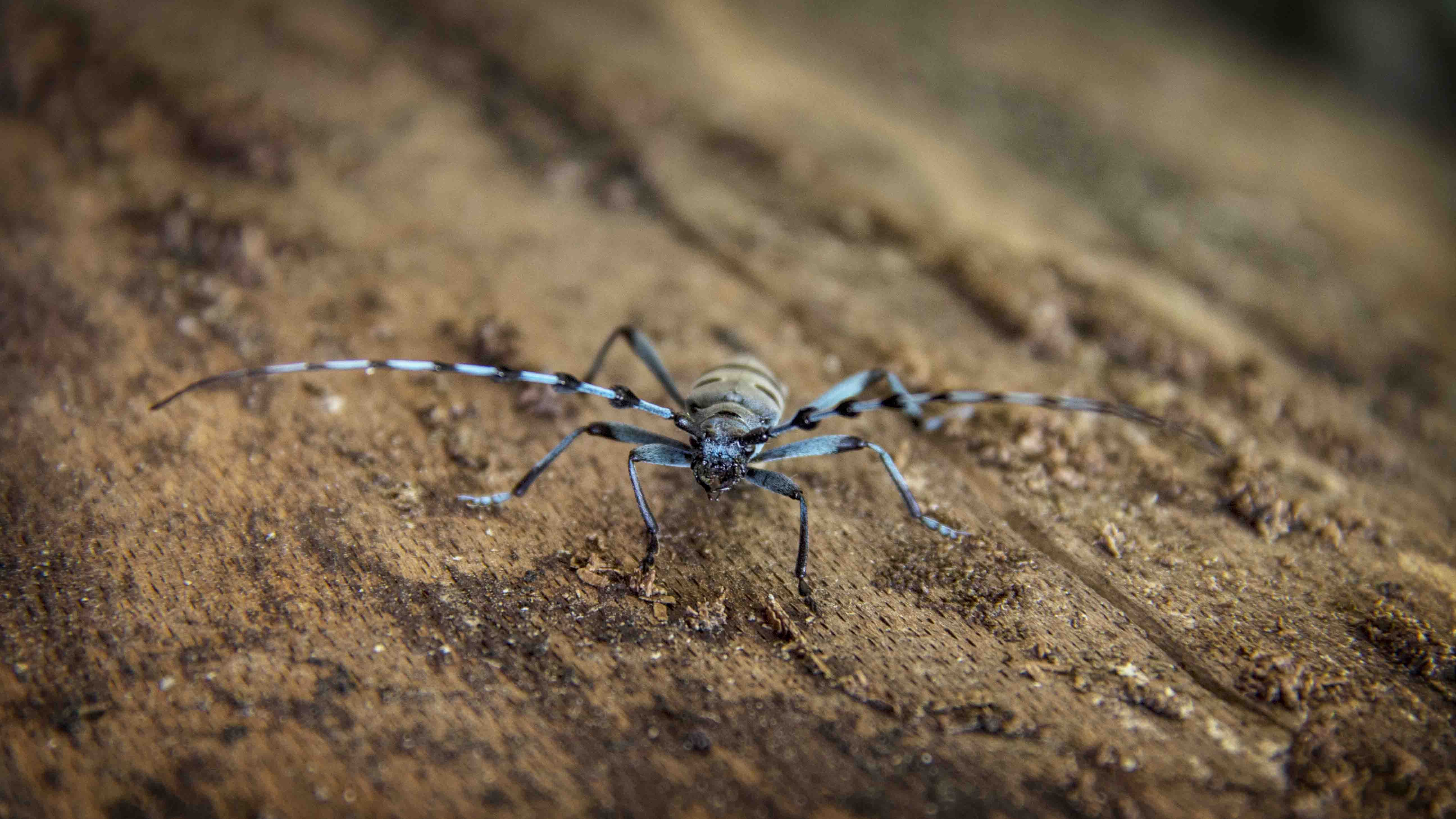 Black and Gray Spider on Brown Wood Log