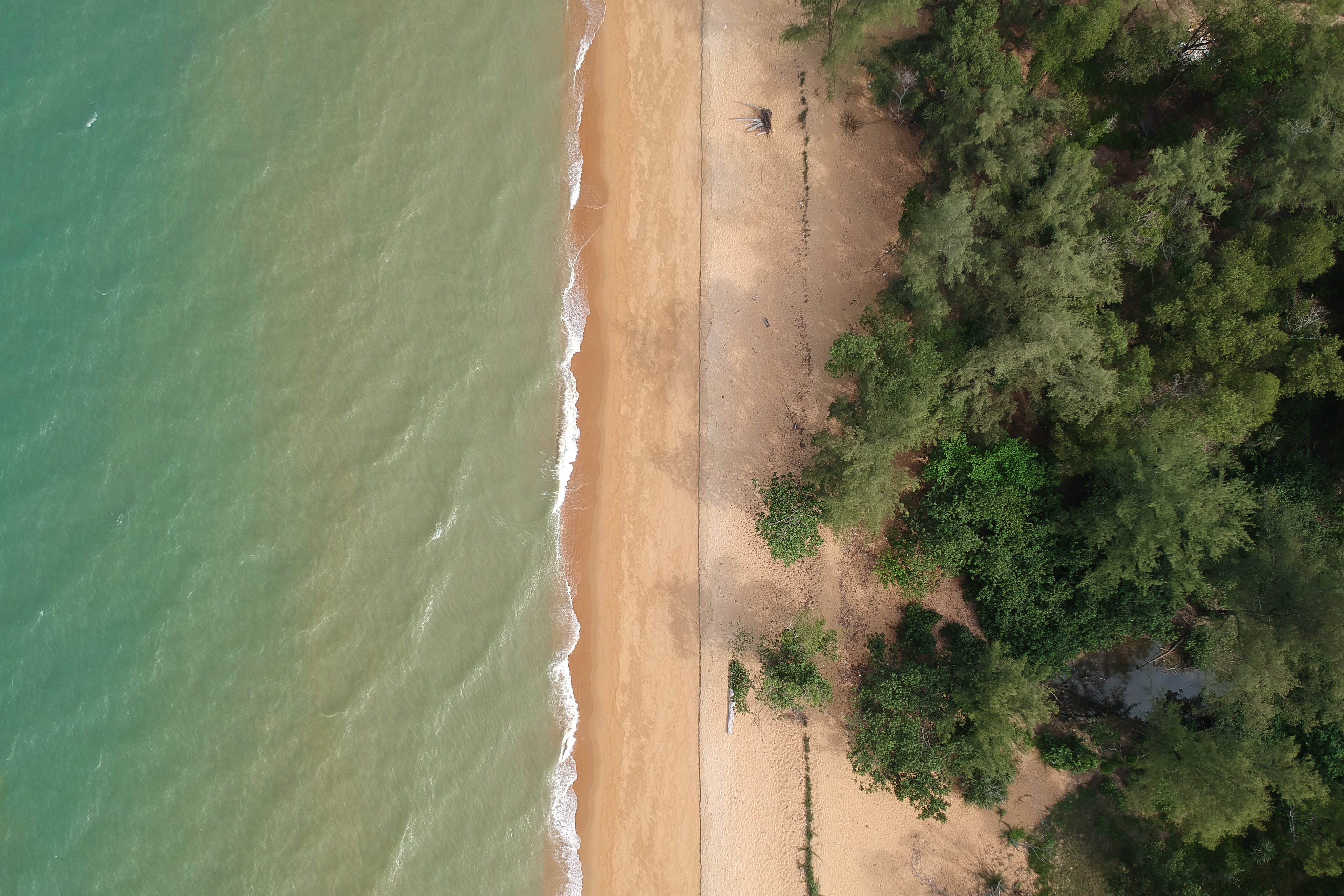 Aerial Photo of Trees on Beach