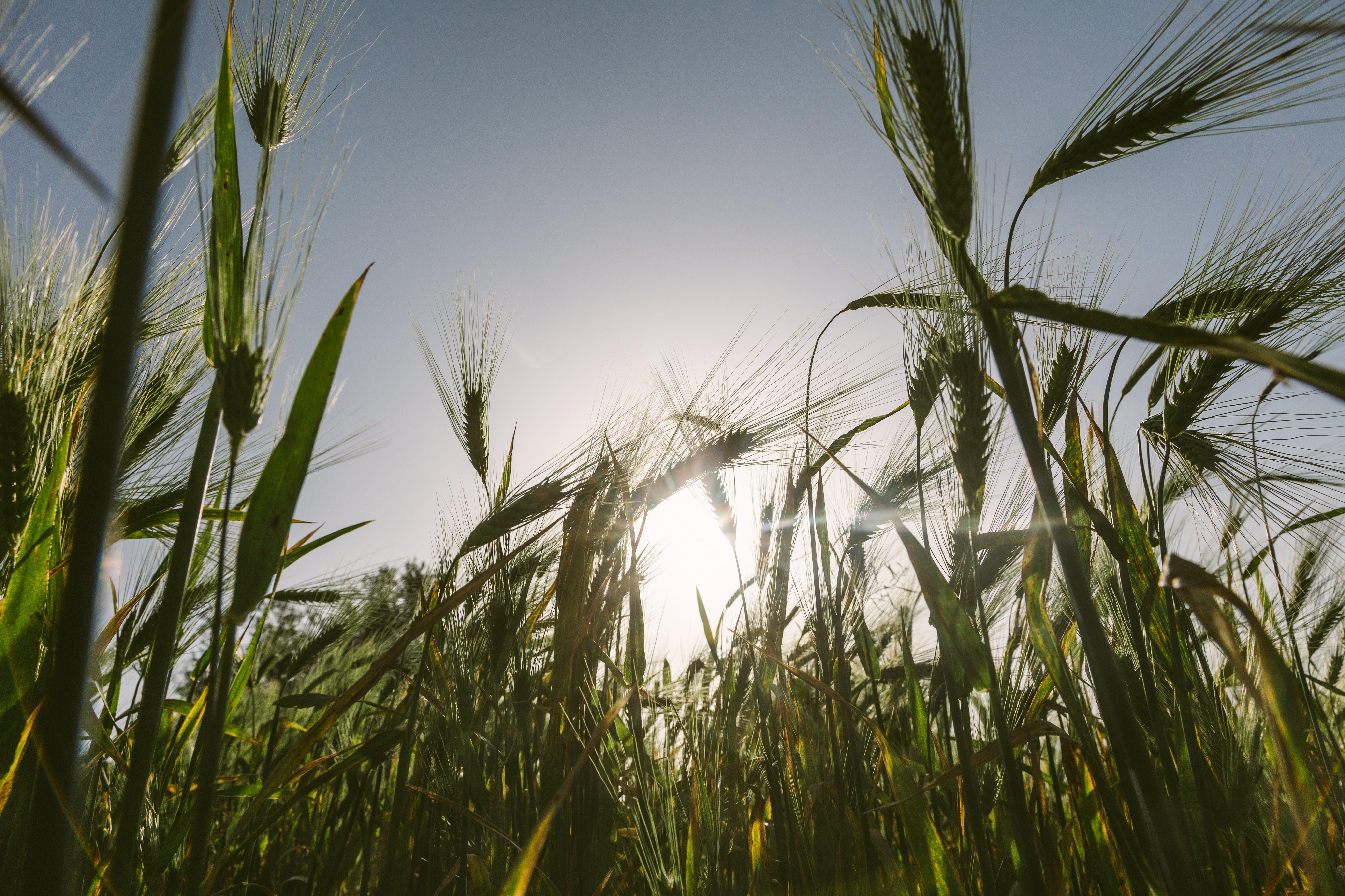 Kostenloses Stock Foto zu natur, feld, sonne, landwirtschaft