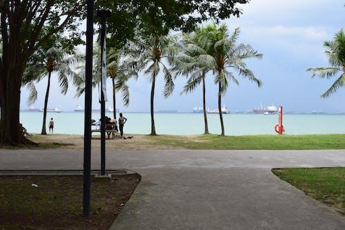 Free stock photo of beach, Beach park, park, singapore