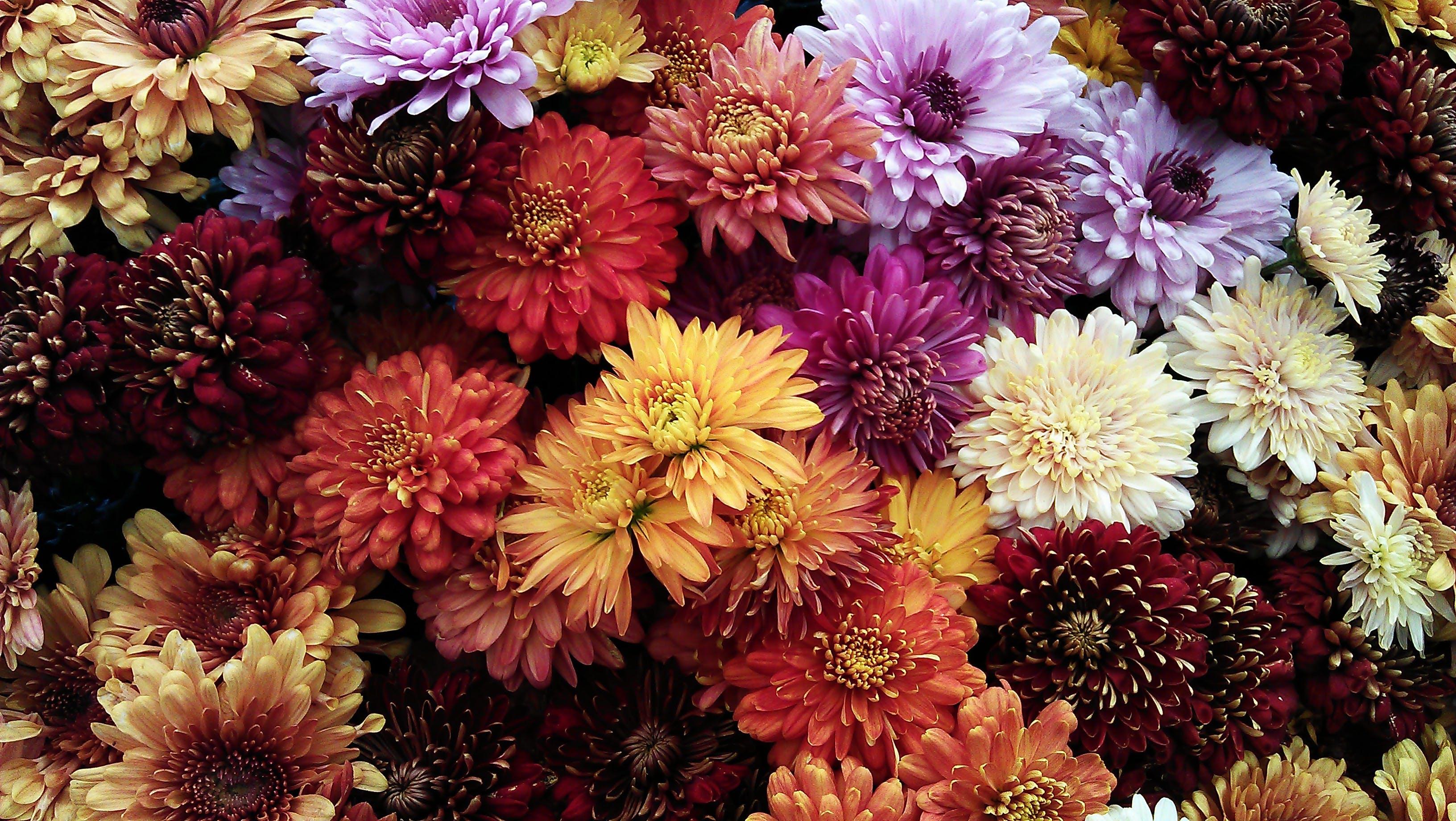 Gratis lagerfoto af assorteret, blomster, blomstrende, Botanisk