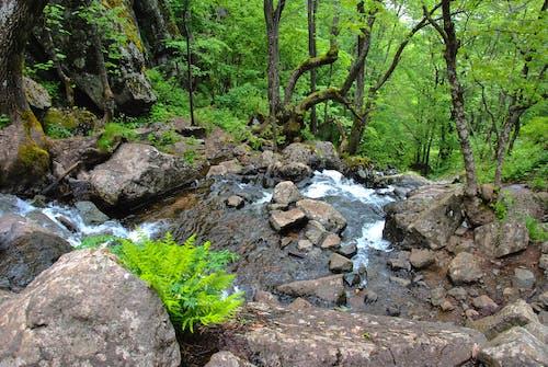 Kostnadsfri bild av grön, skog, vattenfall