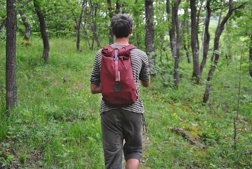 Kostnadsfri bild av grön, ryggsäck, skog
