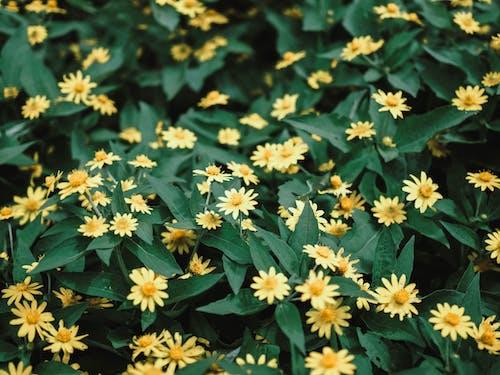 Kostnadsfri bild av blommor, blomsterträdgård, botanisk trädgård, grön