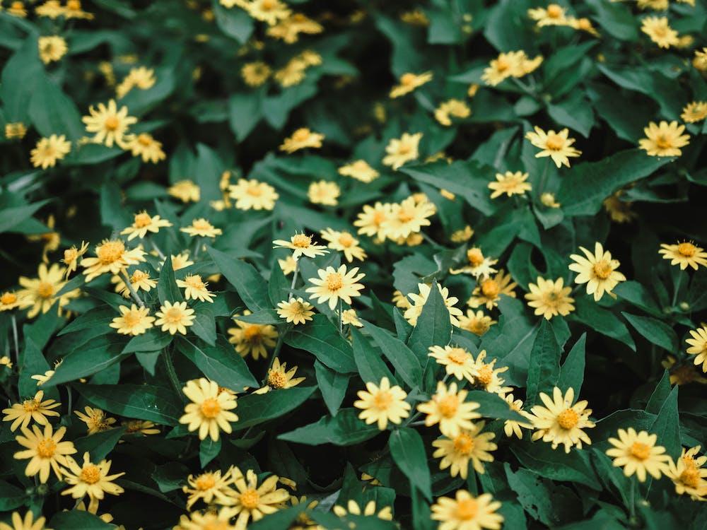 flori, flori frumoase, galben
