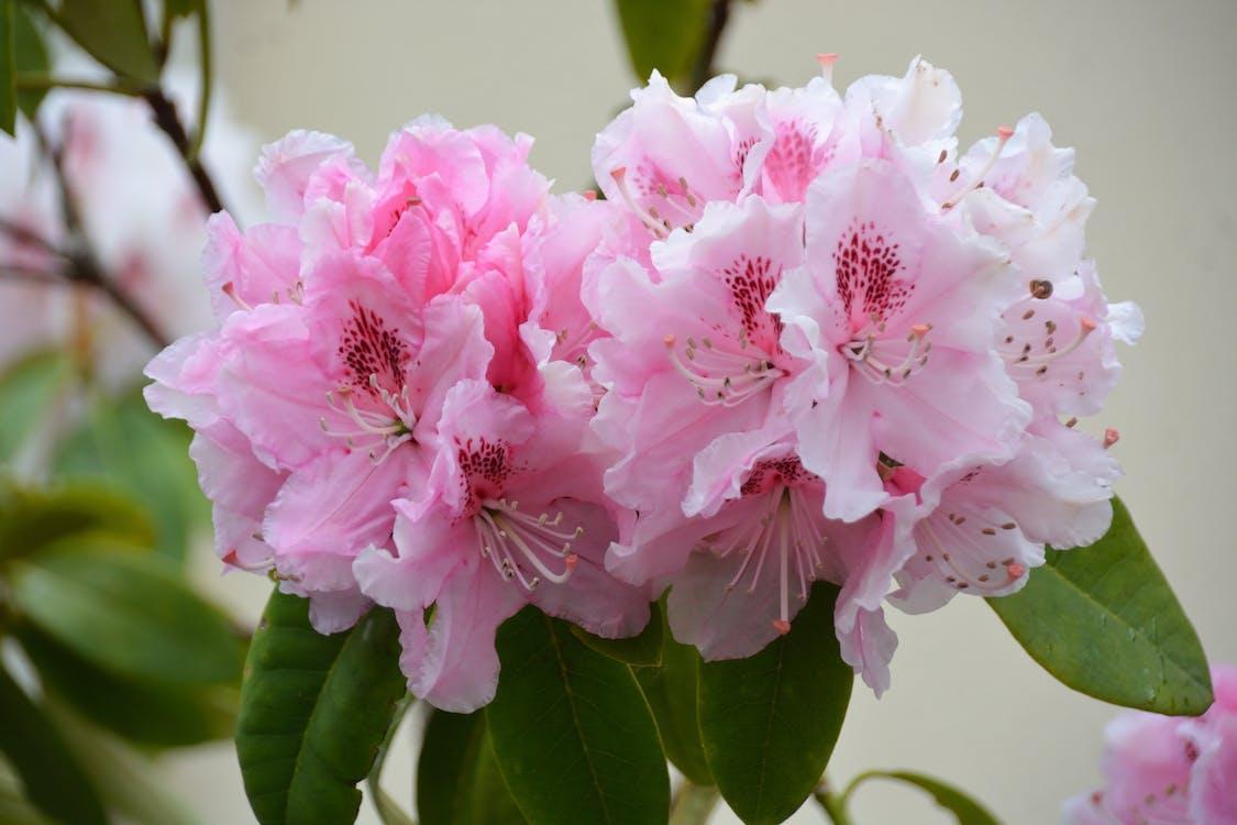 botanique, fleurs, floraison
