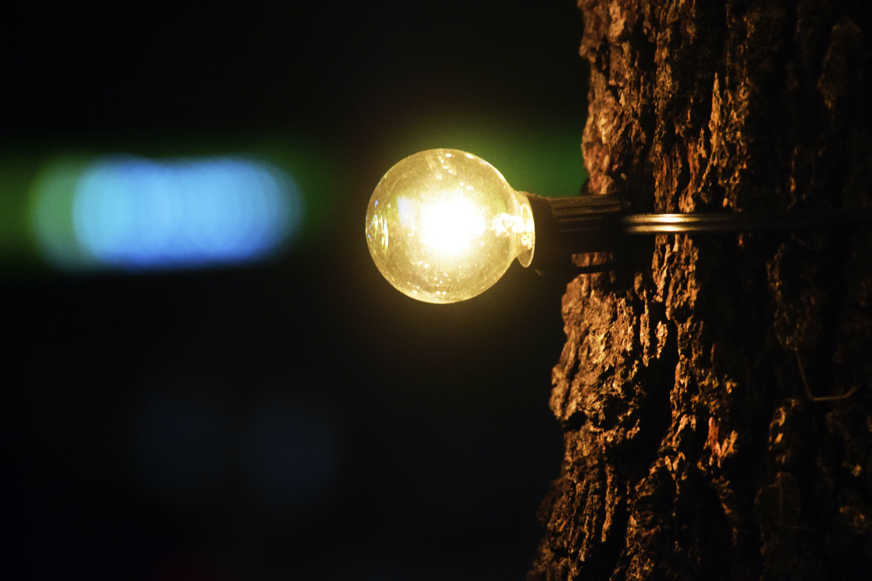 Free stock photo of contrast, focus, light, lightbulb