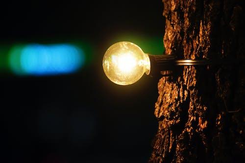 açık, ağaç, gece, karşıtlık içeren Ücretsiz stok fotoğraf