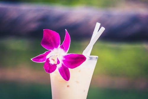 Kostenloses Stock Foto zu cocktail, getränk, pina colada, schöne blumen