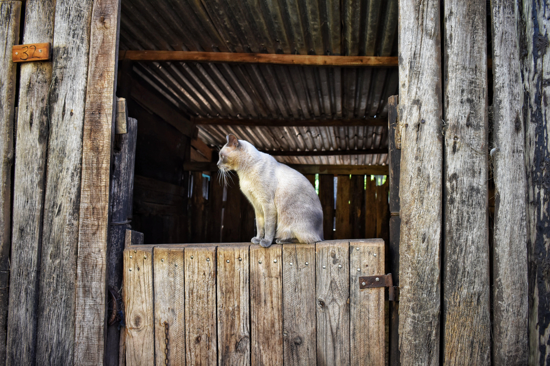 Free stock photo of animal, animal photography, cat, farm