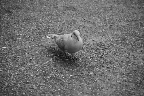 Immagine gratuita di animalier, bec, faune, oiseau