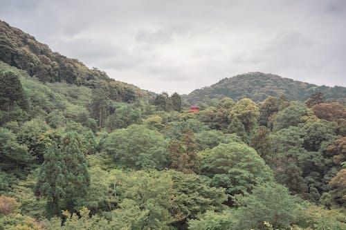 Fotos de stock gratuitas de Japón, montaña, osaka, pacífico
