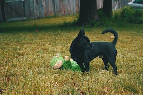 Gratis stockfoto met #bos, #bossen, #dog, #outdoorchallenge