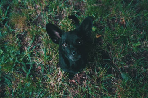 Aerial View Photography of Black Puppy on Green